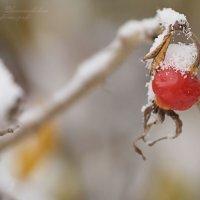 Первый снег :: Юлия Игнатьевская