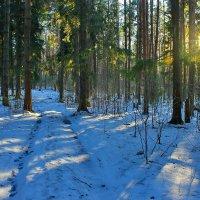 Зимним солнечным  днём. :: Николай Крюков