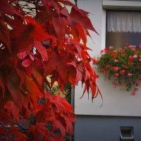 осень в окно :: kuta75 оля оля