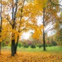 Осенние мотивы :: Виталий