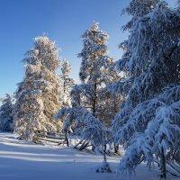 Зима :: Павел