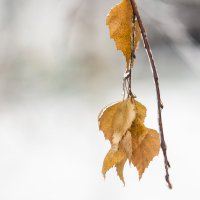 Осень :: Ekaterina Catskaya