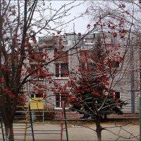 Рябиновые бусы в детском саду :: Нина Корешкова