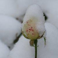 А снег идёт... :: Вячеслав Медведев
