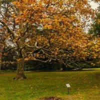 Осень рисует красками :: Антон Смольянинов