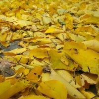 Осеннее покрывало.. :: Игорь Карпенко