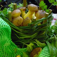 Лукошко с грибами. :: nadyasilyuk Вознюк
