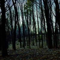 Forest... :: Алина Давыдова