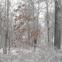 Зимний пейзаж :: Сапсан