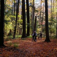 лес в сентябре. :: Alexander Hersonski