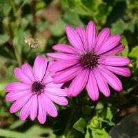 Цветы в моем саду :: Виктория Калицева