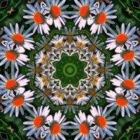 Ромашки :: Фотогруппа Весна.