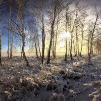 Поутру зимой проснувшись 7 :: Сергей Жуков