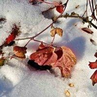 листочки на снегу :: юрий иванов