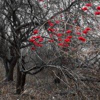 Старый сад 1 :: Юрий Бондер