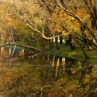 Золотые отражения.. :: Sergey Gordoff
