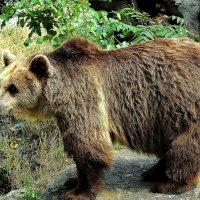 Авторитет зоопарка :: Swetlana V
