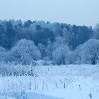 Зимняя синева :: Ирина Зубарева