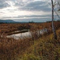 Рыжая осень Сибири :: Евгений Карский