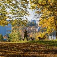 Осенняя фотосессия любимых собак :: Владимир Безбородов