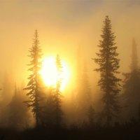 Солнце разгоняет туман :: Сергей Чиняев