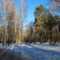 Ноябрь в Тульском парке. :: Инна Щелокова