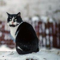 Cat :: Сергей Антонов