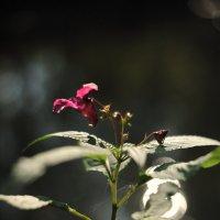 Лесной цветок :: Виктор Берёзкин