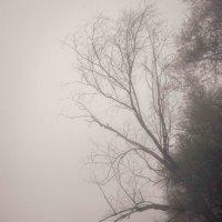Добро пожаловать в туман... :: Татьяна Степанова