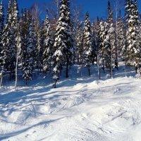 Зима ...ноябрь . :: Мила Бовкун