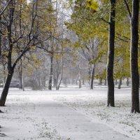 Первый снег. 1 :: shvlad