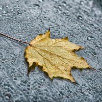 Осень. Прощальное письмо... :: Александр Беляков