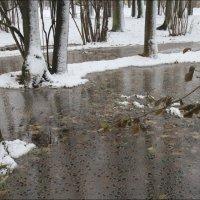Зима наступает :: galina bronnikova