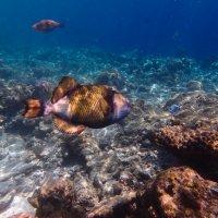 Обитательница рифов :: Павел Катков