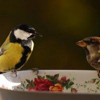 блюдо на двоих :: linnud