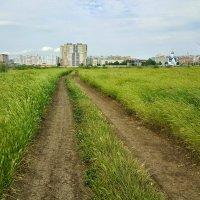 Эх, дороги... :: Игорь Карпенко