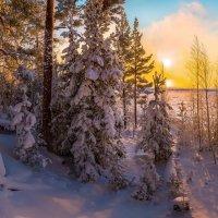 Уютный снежный лес. :: Фёдор. Лашков