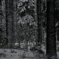 в дремучем лесу :: Владимир