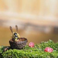 макромир, завтрак осы :: Наталья Вельди