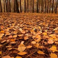 Осень :: Борис Данилов