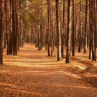 Парк осень :: Борис Данилов