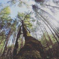 Лес #2 :: Алексей Кривых