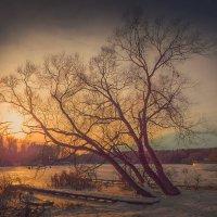 Остыли реки и земля остыла, остыл и сад, остыл наш пруд. :: ALISA LISA