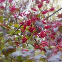 уж небо осенью дышало... :: Наталья Шор