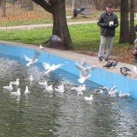 Кормление чаек и голубей :: Александр Скамо