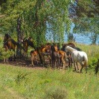 На берегу Байкала 2 :: Виталий