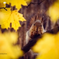 Фотоохота :: Kirill Chepurnoy
