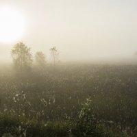 Волшебство природы :: Федор Пшеничный