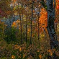 Золотая осень Nr.1 :: Людвикас Масюлис