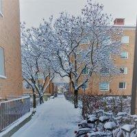 вот он первый снег... :: liudmila drake